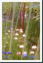 Hampton Court Flower Show 2010 028