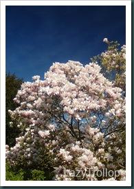 Nymans garden 07 April 2011 050
