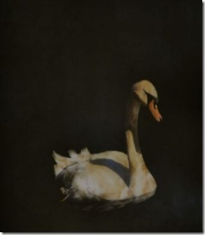 Swan 60x60 3400 - Copy