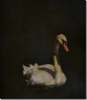 Swan 60x60 3400 - Copy