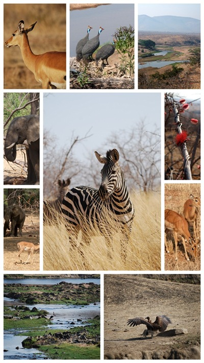 Wild animals in Ruaha National park