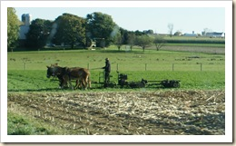 amish workin field 09