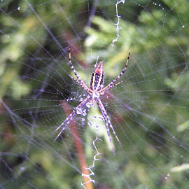 Oh what a tangled web by Julie Van Kirk - Nature Up Close Webs