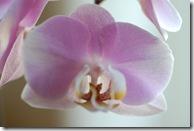 orkide 3