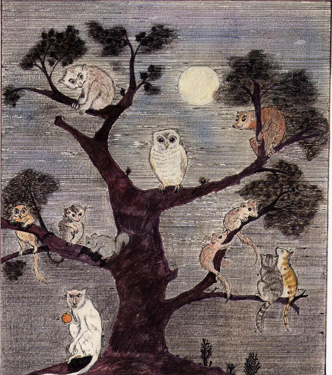Bichos en un árbol