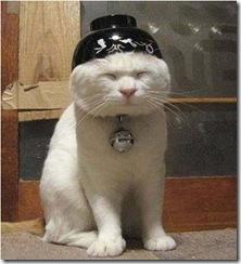 Katt07