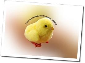 Kyllingtrofe