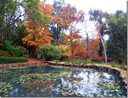 araluen pond