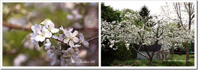 apple-blossom-diptichLR