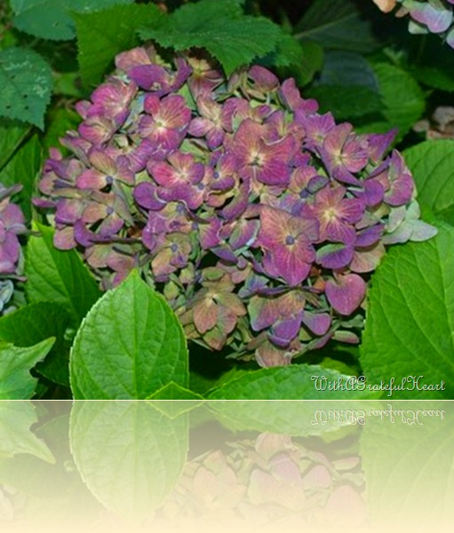 Hydrangea_Bouquet