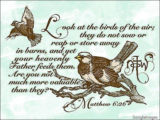Sparrow Scripture