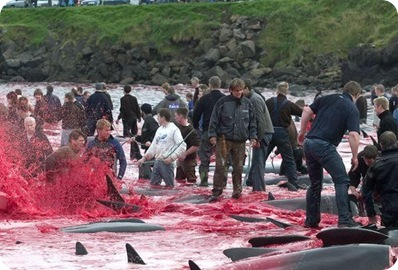 whale_hunting_09