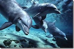 dolphins-bottlenose