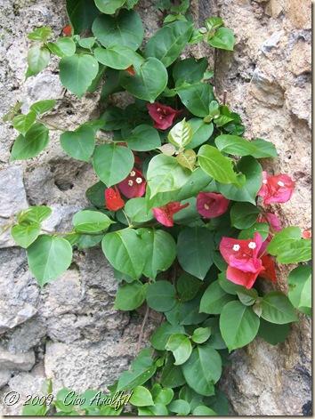 Ciao Amalfi Coast Blog Bougainvillea2