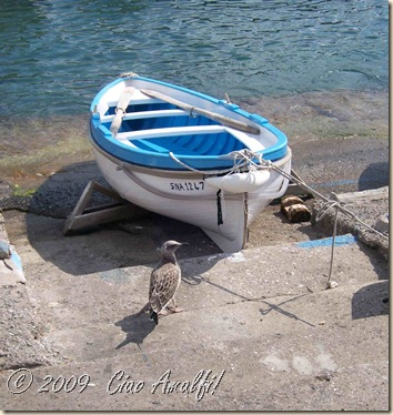 Ciao Amalfi Coast Blog Seagull and Boat