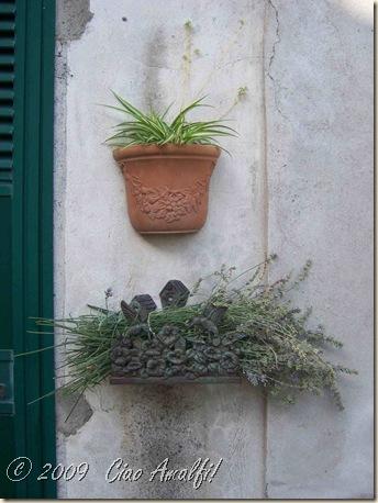 Ciao Amalfi Coast Blog Lavender 2009