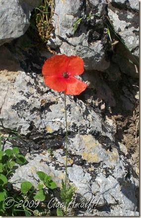 Ciao Amalfi Coast Summer Rosso5