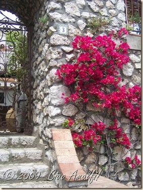 Ciao Amalfi Coast Blog Pink Bougainvillea Capri