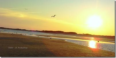 LBI_beach_escape_seagulls._F