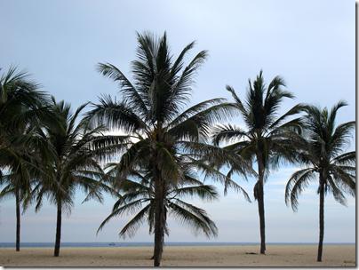 Palm Trees Cuba
