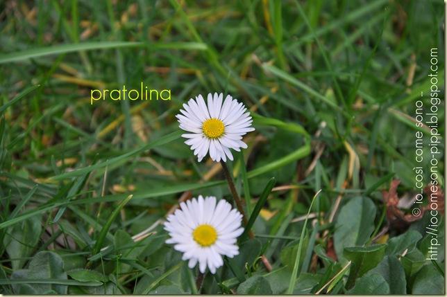 pratolina