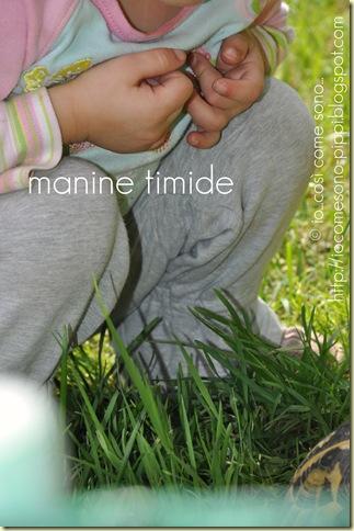 manine timide