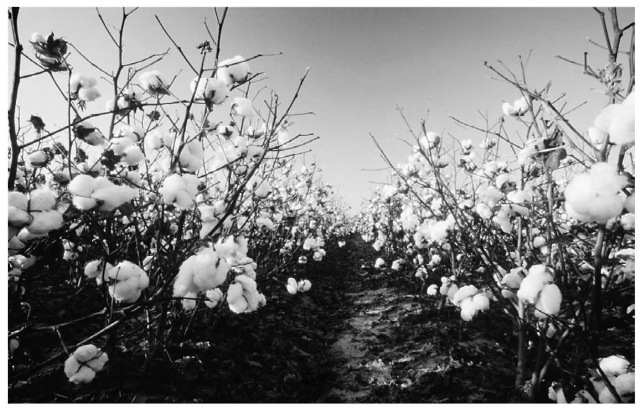 Cotton is an example of a natural polymer.