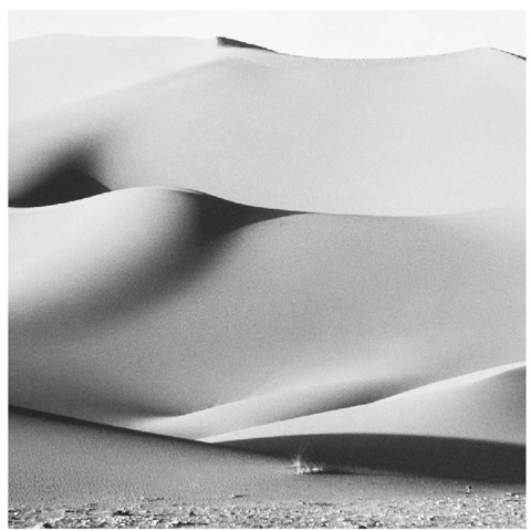 BENI ABBES DUNES, SAHARA DESERT. SOIL IS A MAJOR FACTOR INFLUENCING THE QUALITY OF A MICROCLIMATE: SOIL THAT IS SANDY IN TEXTURE AND LIGHT IN COLOR IS LIKLELY TO REFLECT MURE LIGHT AND HEAT.