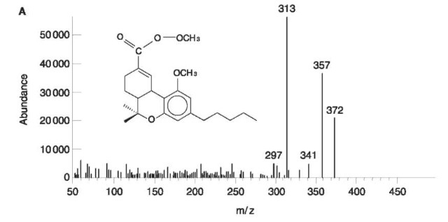 analysis of tetrahydrocannabinol Positive identification and quantification of the thc/cbd ratio is a primary  objective in the analysis of cannabis cannabis is analyzed for several different.