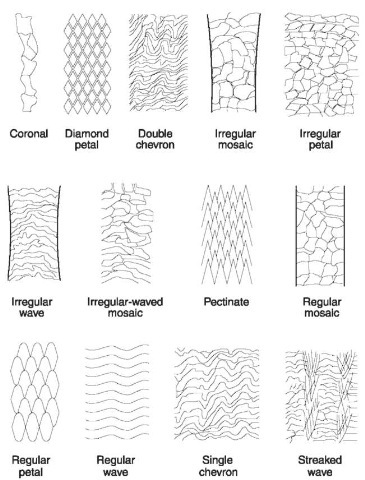 Scale patterns. Details of patterns seen on hairs of different families of animals.