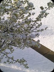 4-29-2011 spring snow (1)