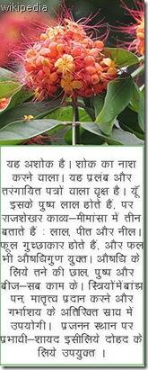 180px-Sita-Ashok_(Saraca_asoca)_flowers_in_Kolkata_W_IMG_4146