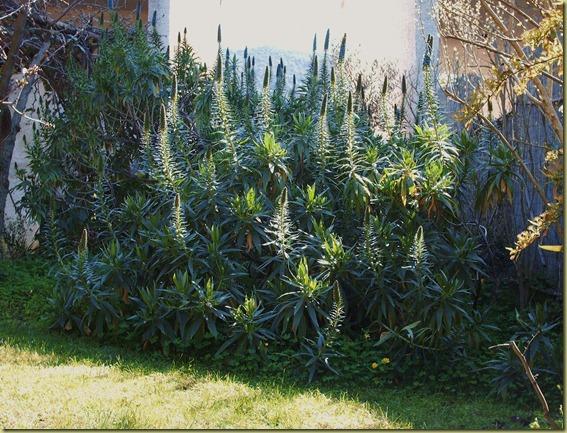 Luci ed ombre nel mio giardino 071