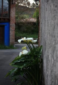 Zoo de Santillana 008