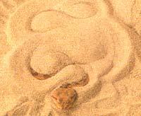 งูพรางตัว