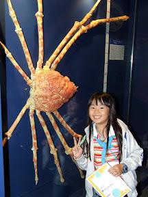ปูแมงมุมญี่ปุ่น