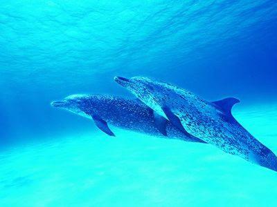 海底世界海豚潛水游泳