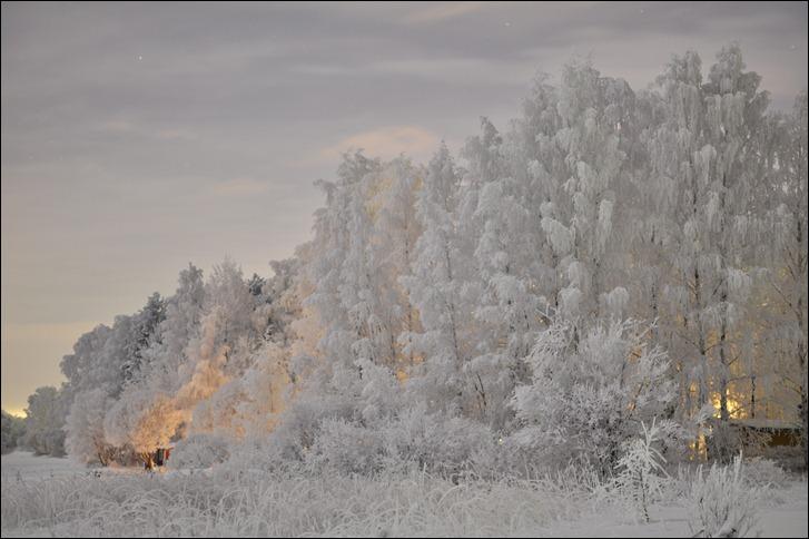 White forest, the nightshot