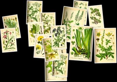 Ver Ilustraciones de botánica
