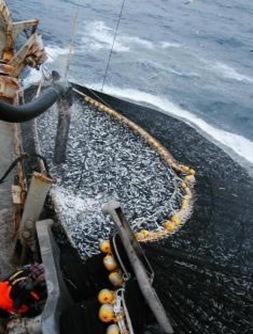 pesca_industrial01