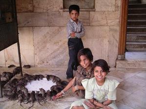templo de ratas