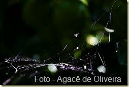 Aranha na teia (1)