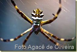 Aranha na teia (2)