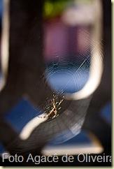 Aranha na teia (3)