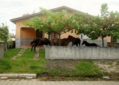 Rincao-cavalos-1