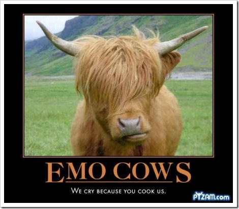 Funny emo cow picture.