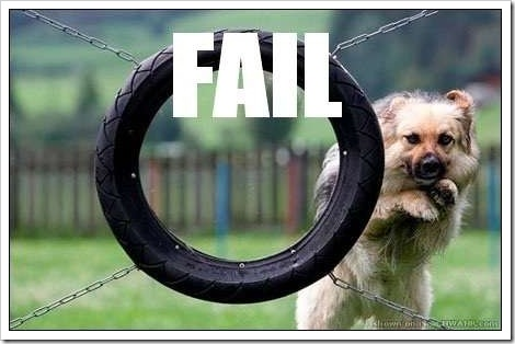 Funny dog picture | Dog fails to jump through a tire.