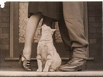 adorable kitty with couple 1.png