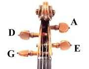 Violin peg strings Musical Notes  Part 3 The violin