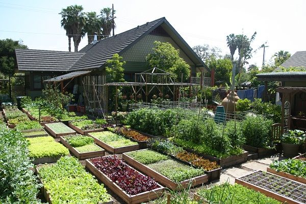 Backyard Farming On An Acre : What challenges, if any, do you anticipate in the future with regards